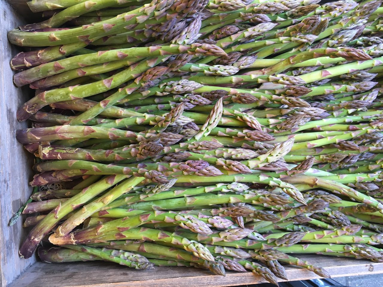 English Asparagus     Photo ©Evie Saffron Strands       MAY       This time last year we were talking of having had English Asparagus at the beginning of April, only for it then to be hit by late frosts.  This year we collected our first Kent-grown crop last week.  Despite it feeling late, it was around St George's Day which is the traditional time for starting to cut the crop.  It's hard to resist people's desire for earlier harvests but nature knows best and this year's first cut of English Asparagus from our preferred grower was definitely worth the wait.       April passed in the UK feeling very similar to March.  Save for a few days of warmth mid-month, conditions have been unseasonably cold in most of Europe delaying spring planting.  Italy did provide us with Broad Beans, Peas and Cucumbers; France delivered Wet Garlic and Fraise Clery Strawberries; and the UK produced Jersey Royals, Wild Garlic, Sprouting Broccoli, field-grown Rhubarb and the first good Asparagus.  A burst of sun arrived in the form of Mangoes from India, including Alphonso.  We are definitely overdue some good growing weather.