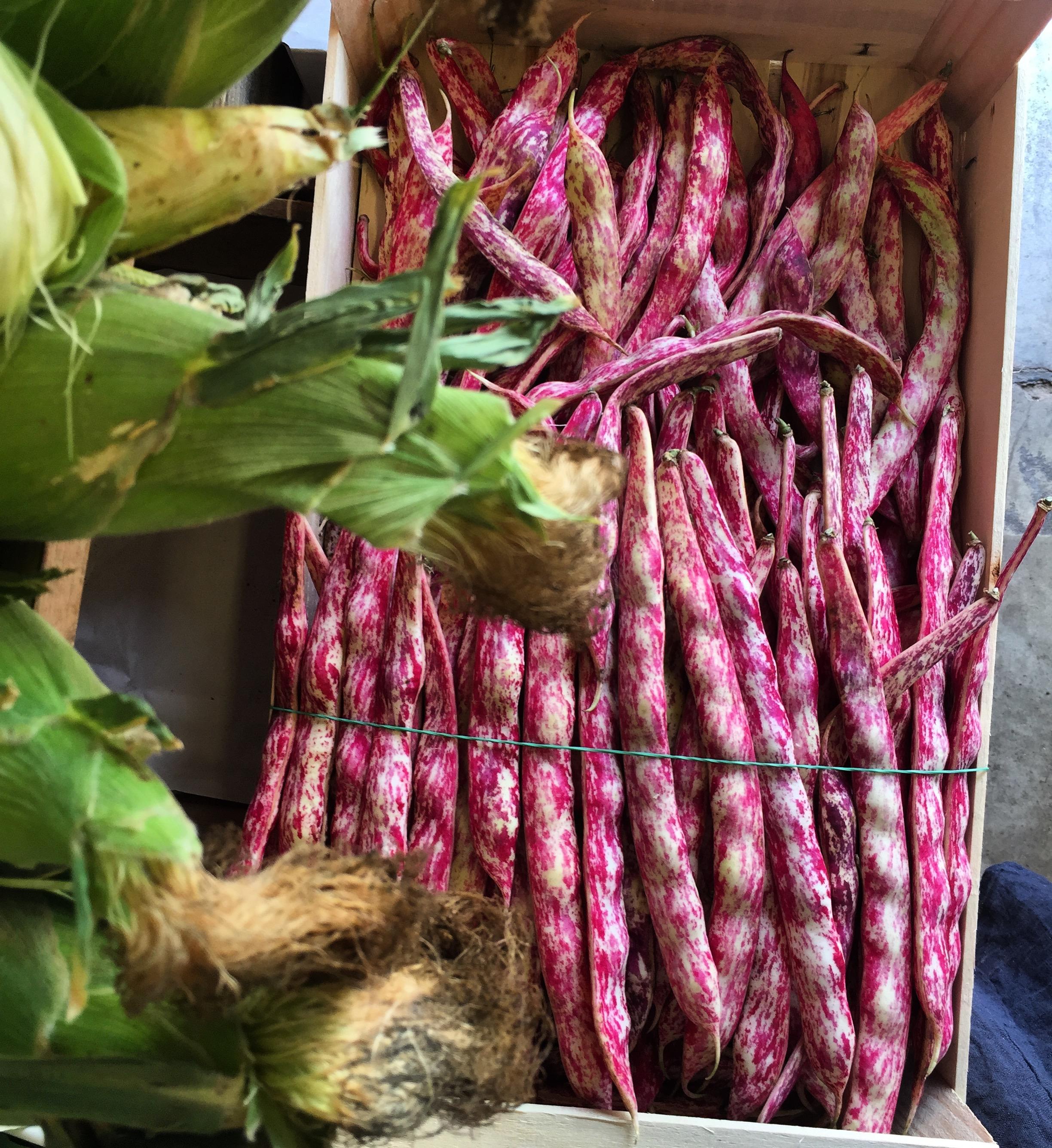 Italian Borlotti Beans & French Corn     Photo © Puntarelle&Co