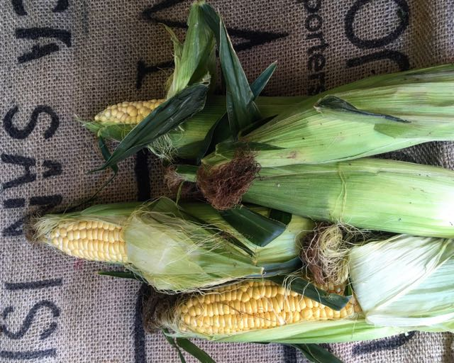 English Sweetcorn/Corn-on-the-cob    Photo © Evie Saffron Strands