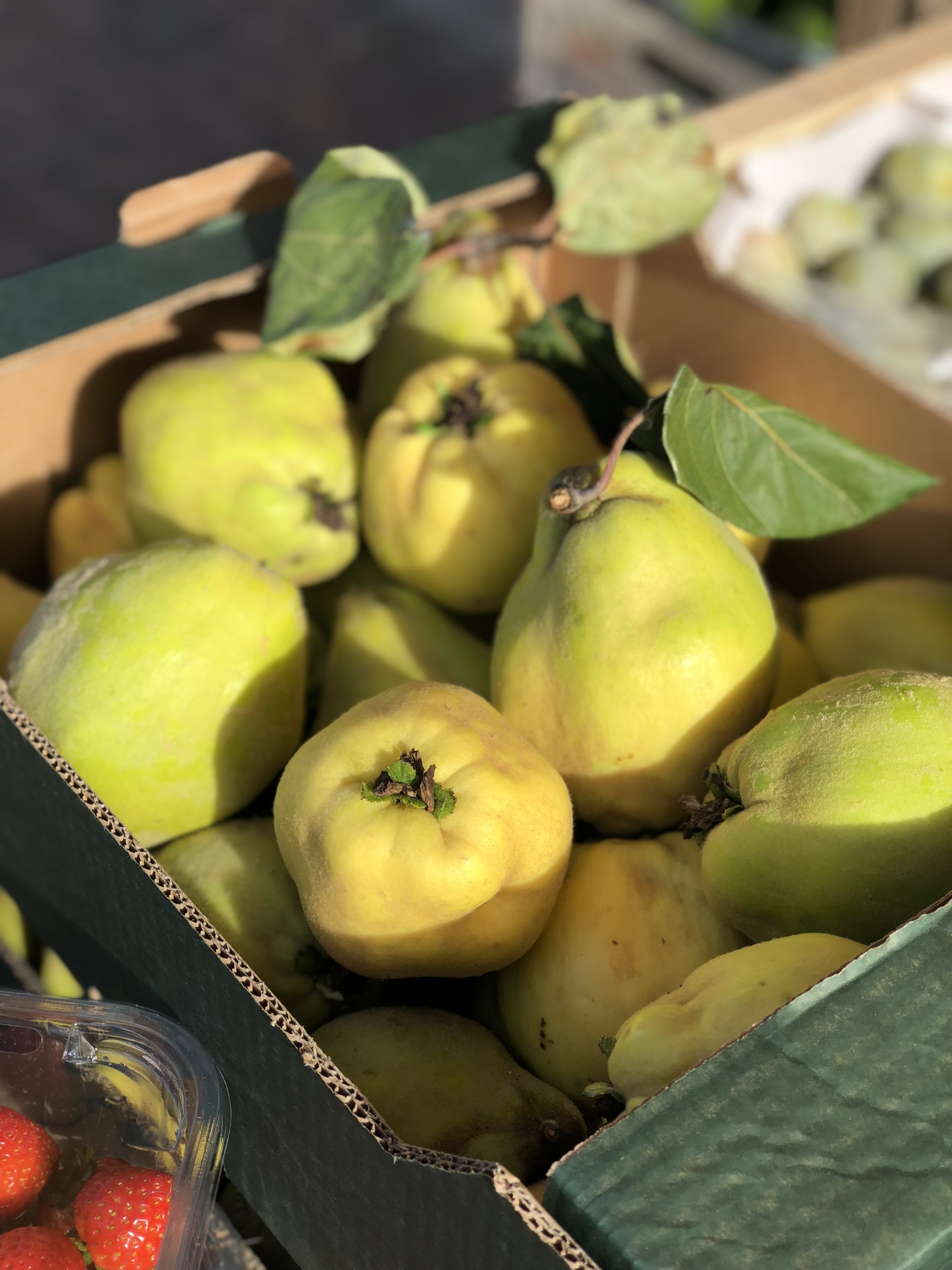 English Quince    Photo © Puntarelle & Co