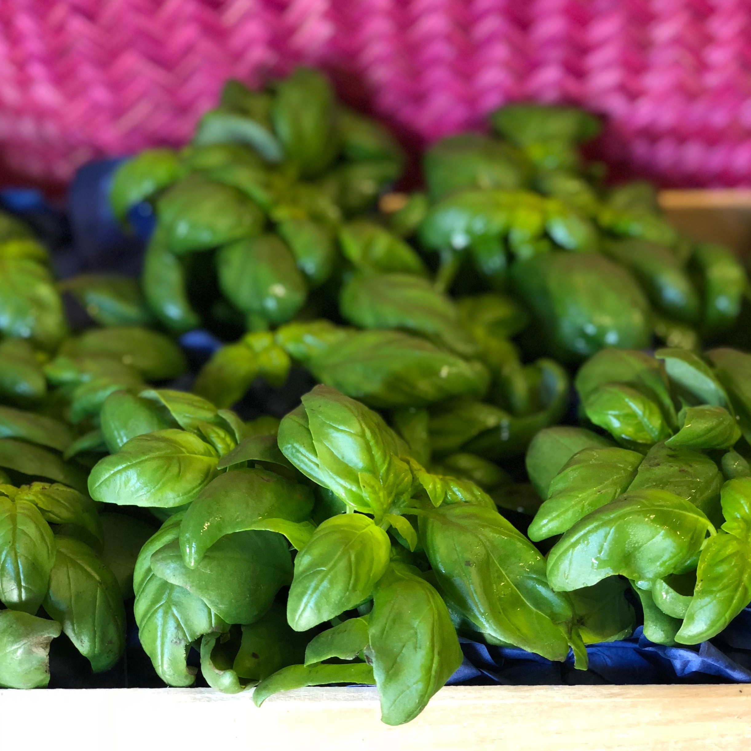 Ligurian Basil    Photo © Puntarelle&Co