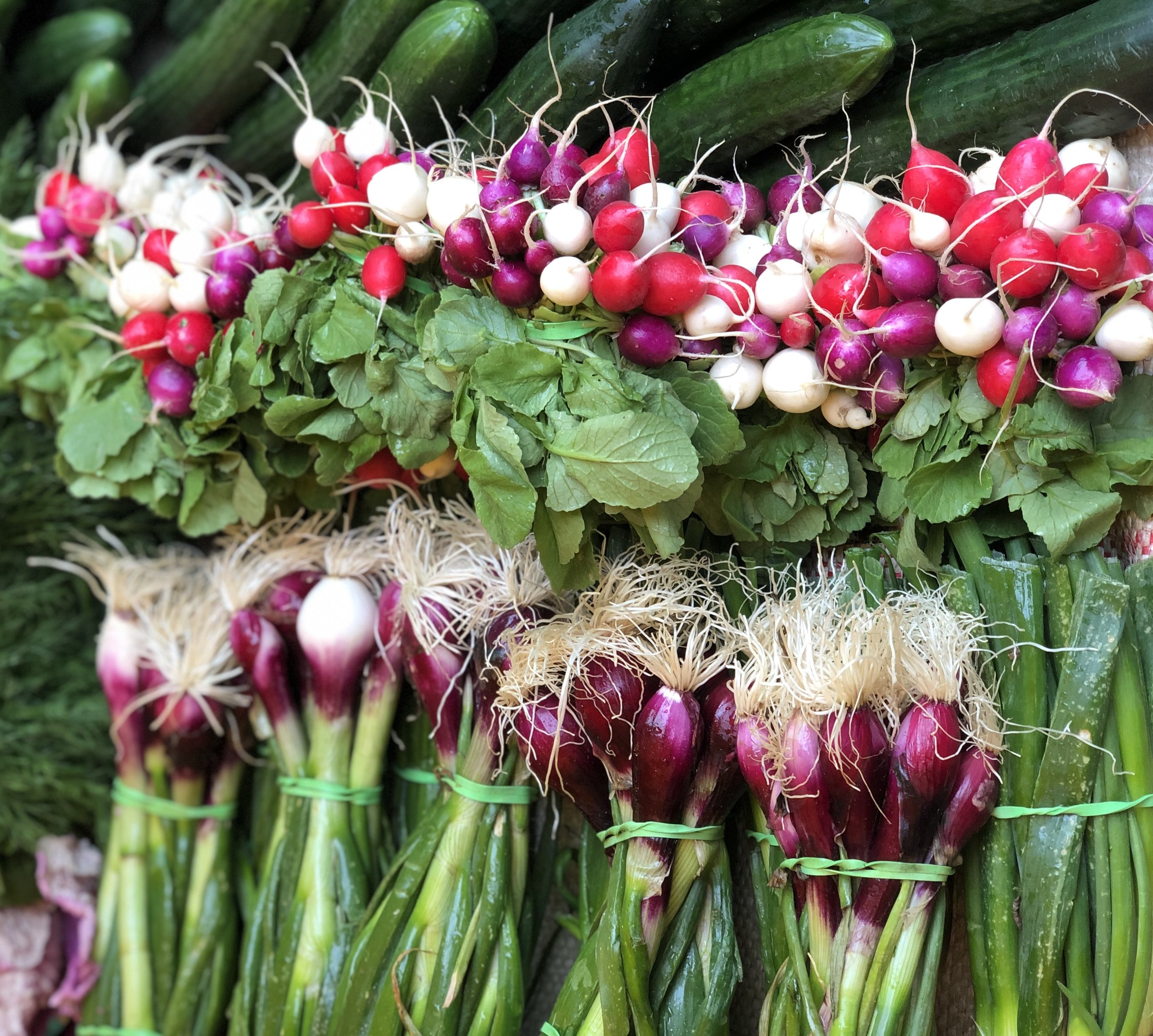 Tropea Onions & Heritage Radishes    Photo ©Puntarelle&Co