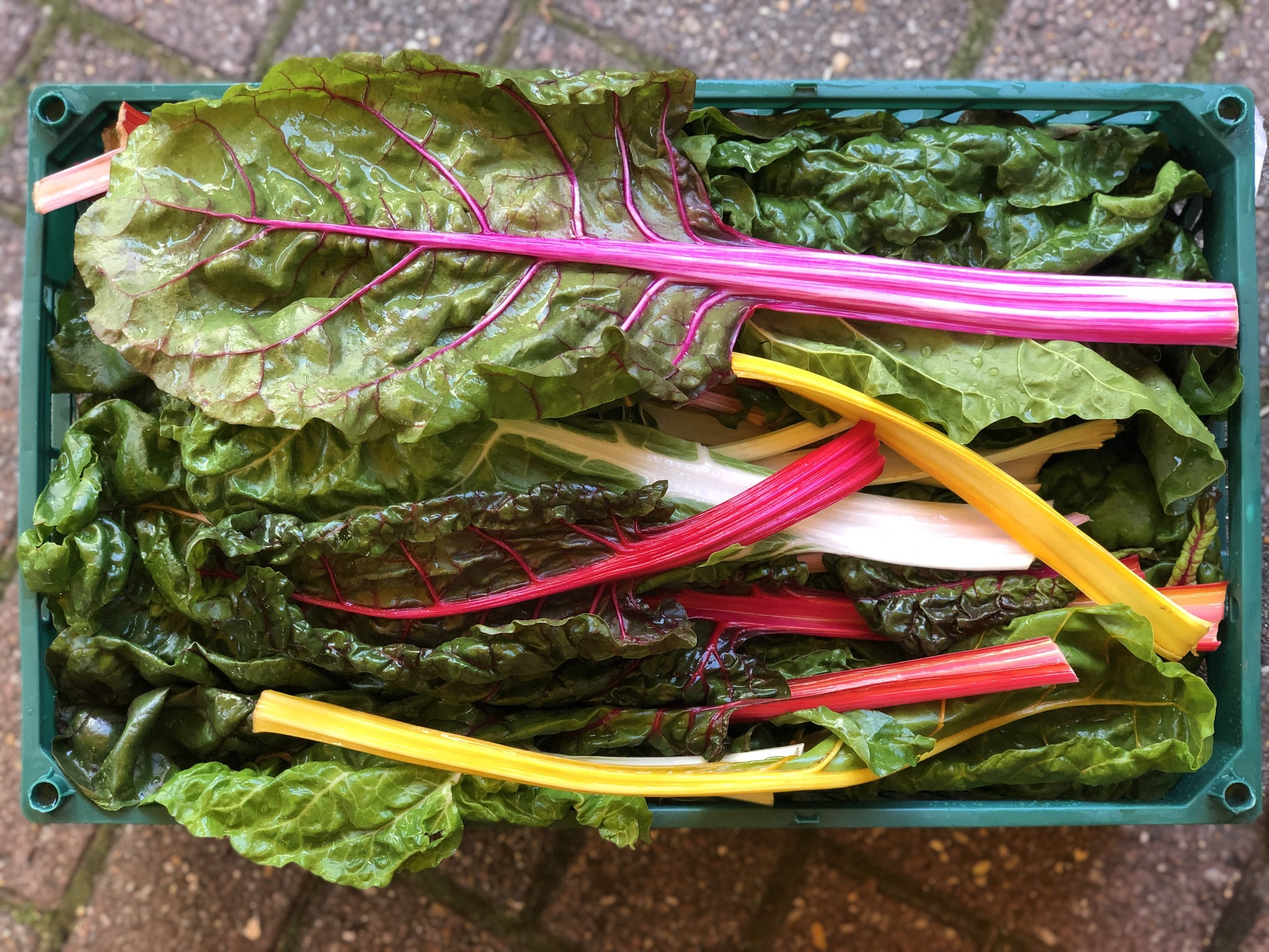 English Rainbow Chard    Photo © Puntarelle&Co