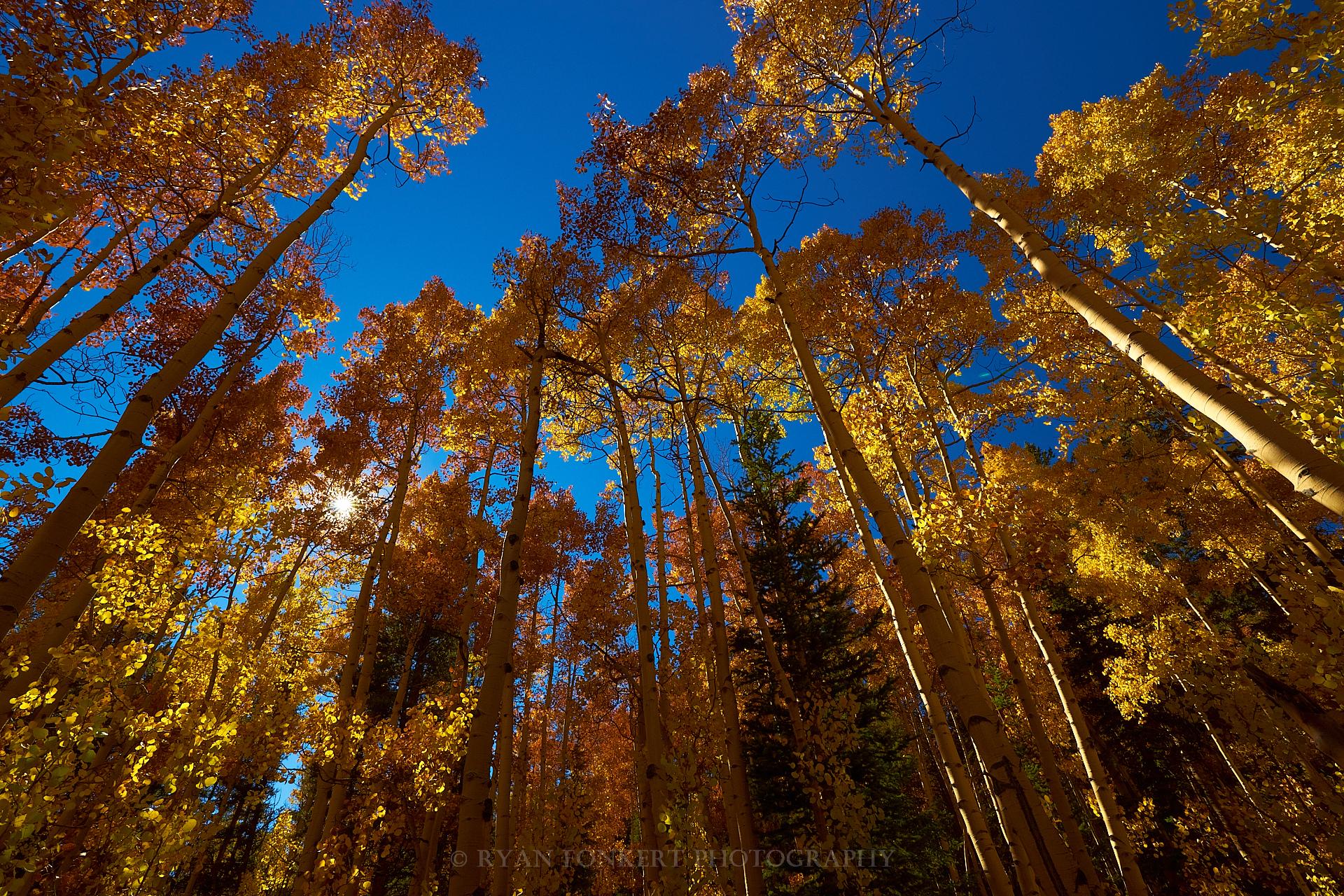 Landscapes_DSC06771.jpg