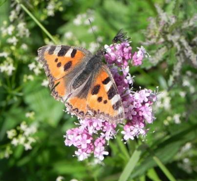De metamorfose van rups tot vlinder staat symbool voor het doorwerken van het rouwproces.