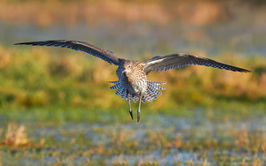 Mary-Curlew-4-lores.jpg