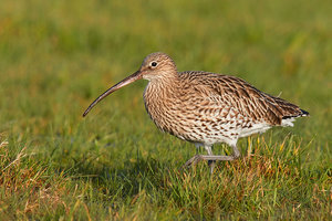 Mary-Curlew-3-lowres.jpg