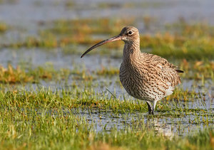 Mary-Curlew-2-lowres.jpg