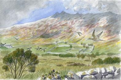 Curlews in Snowdonia