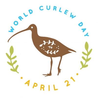 World Curlew Day logo, designed by Nicola Duffy.