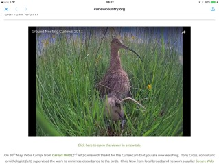 Screen grab from Curlew Country curlew camera