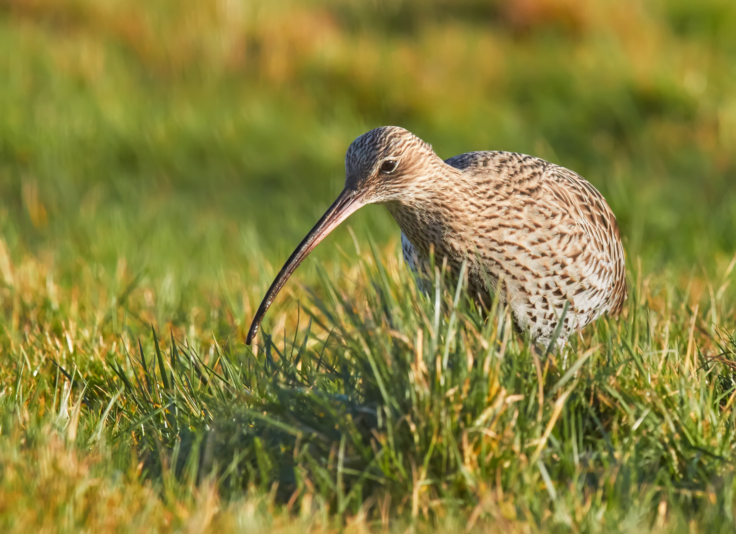 Mary Curlew 1 hires.jpg
