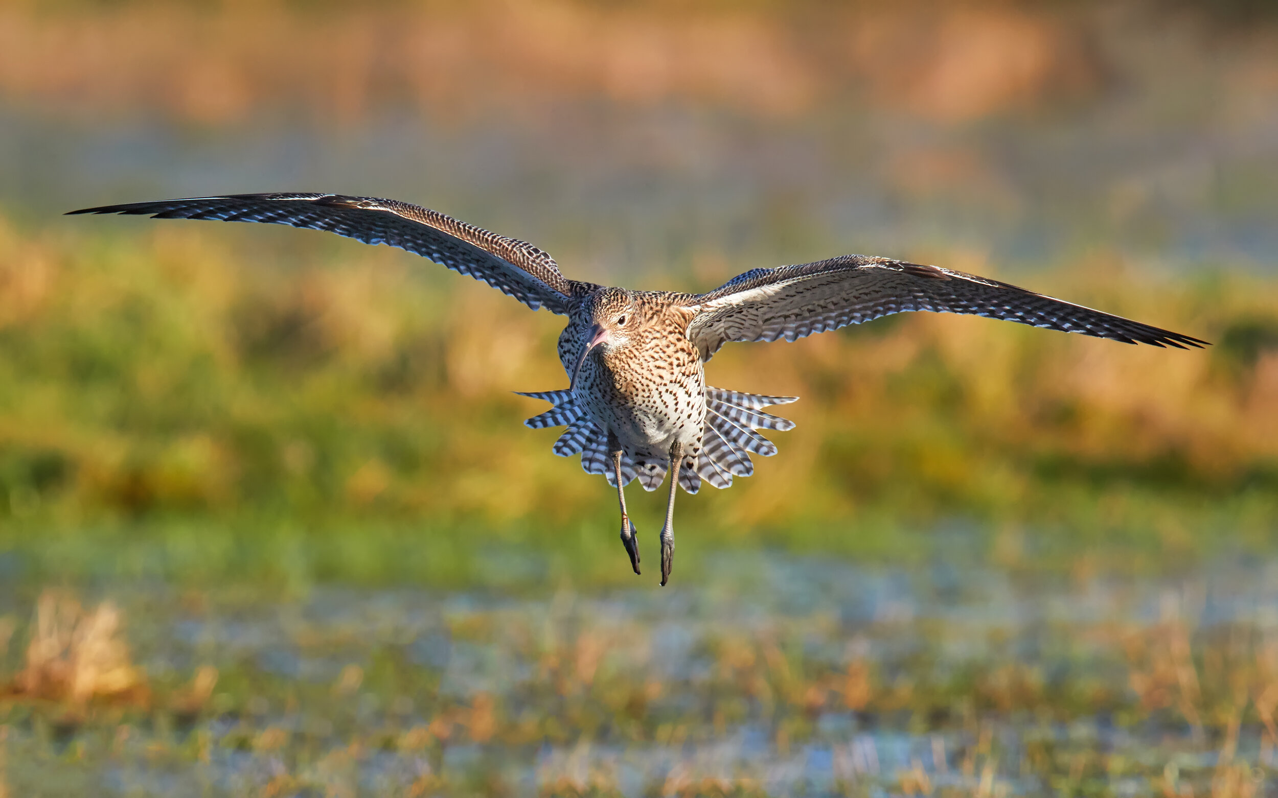 Mary Curlew 4 hires.jpg