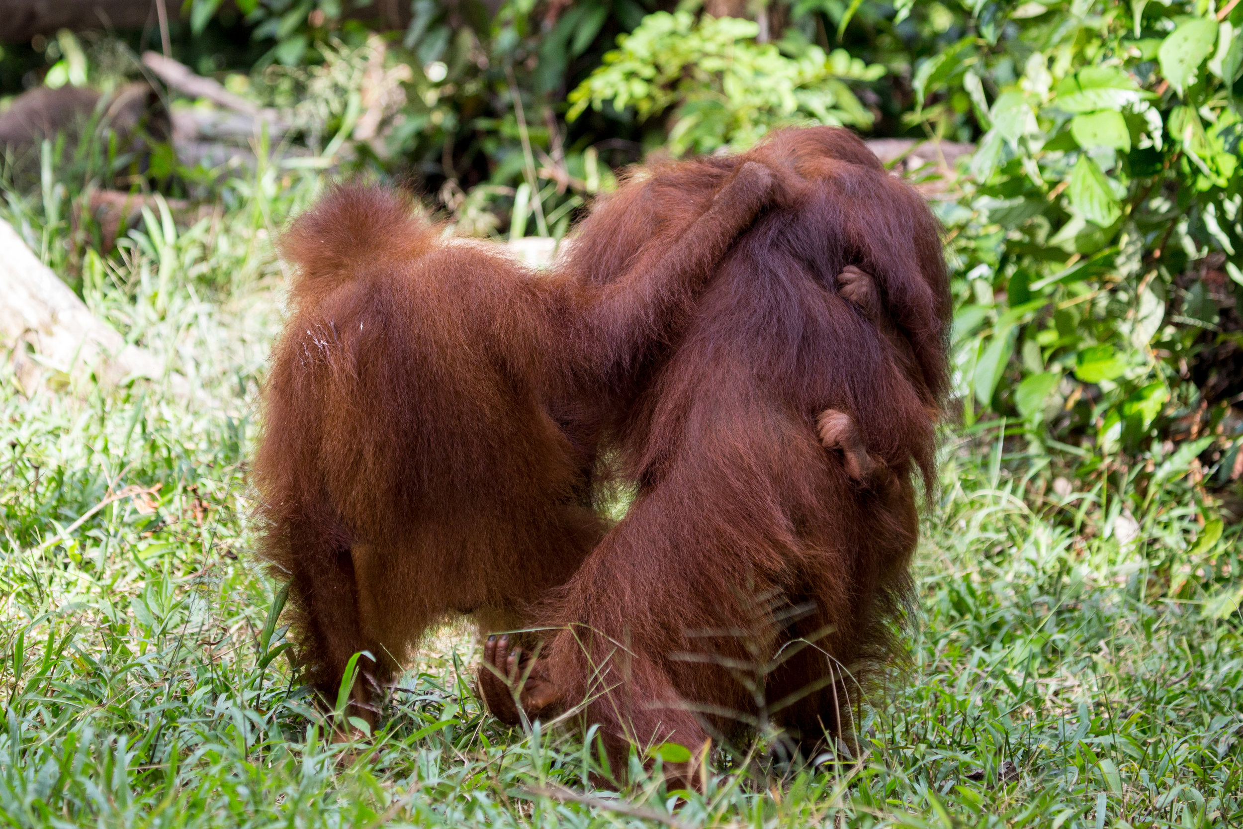 Borneo-103.jpg