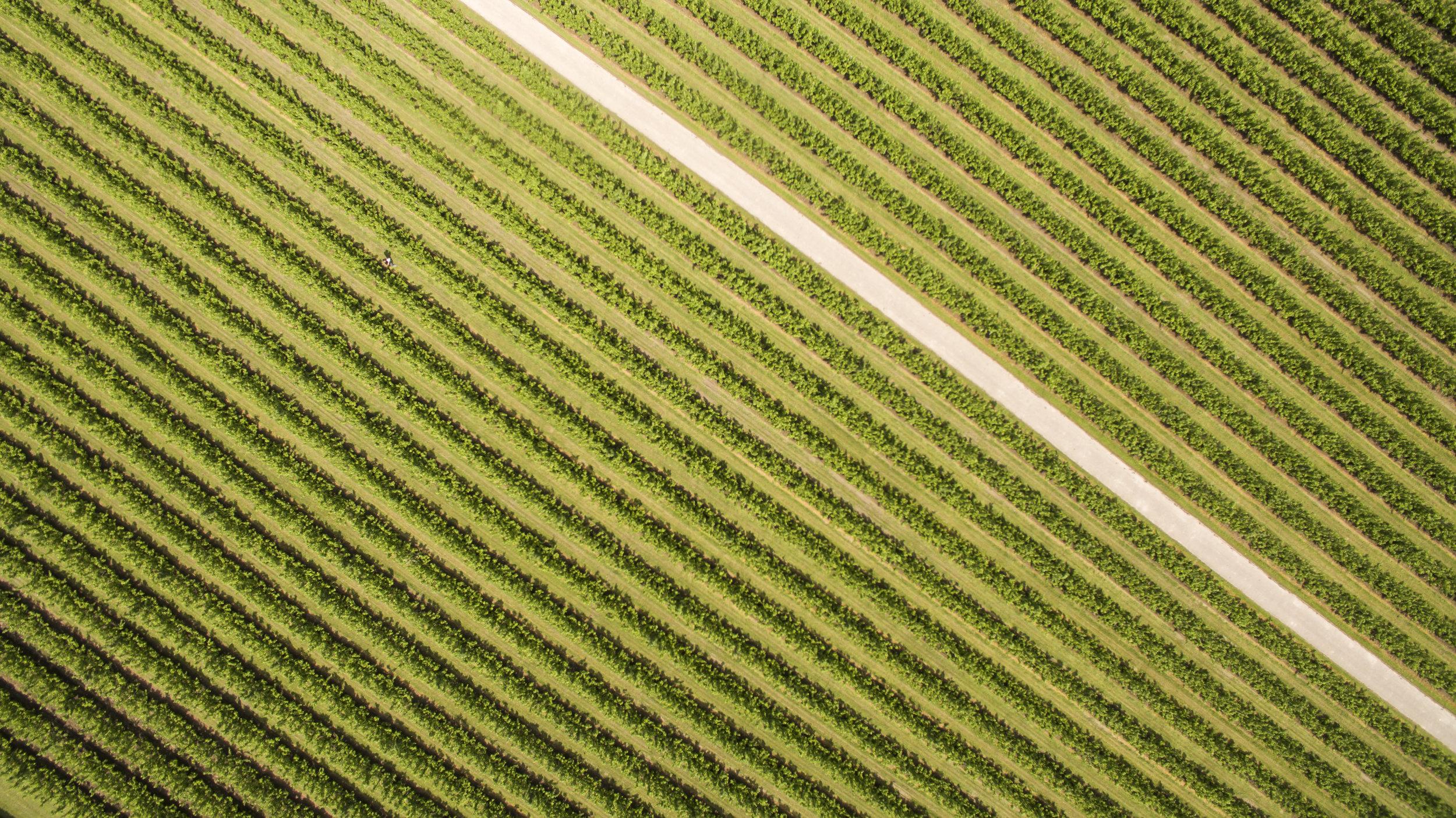 Riet en Gerrit Drone-5.jpg