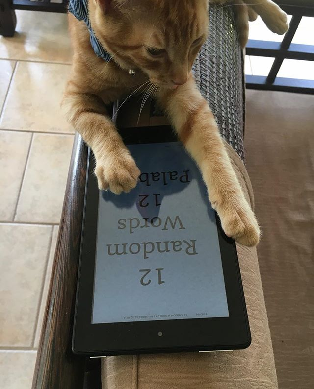 Our hairiest reader so far! Thank you to Stephen who shared the picture with us and 12 Random Words with his kitty!!!! #catsoninstagram #catreading #robwilsonwork #12randomwords #bilingualbooks #dallas