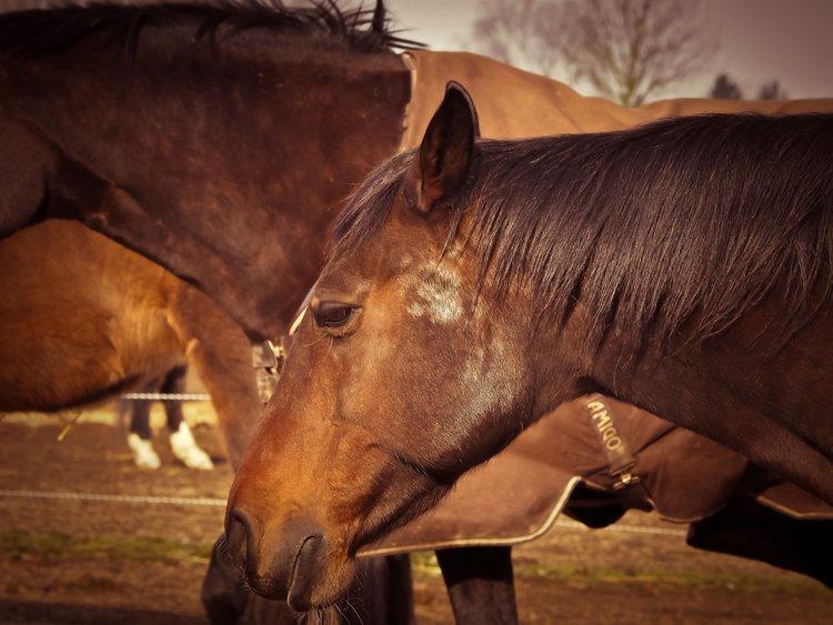 horse-1229152_1920.jpg