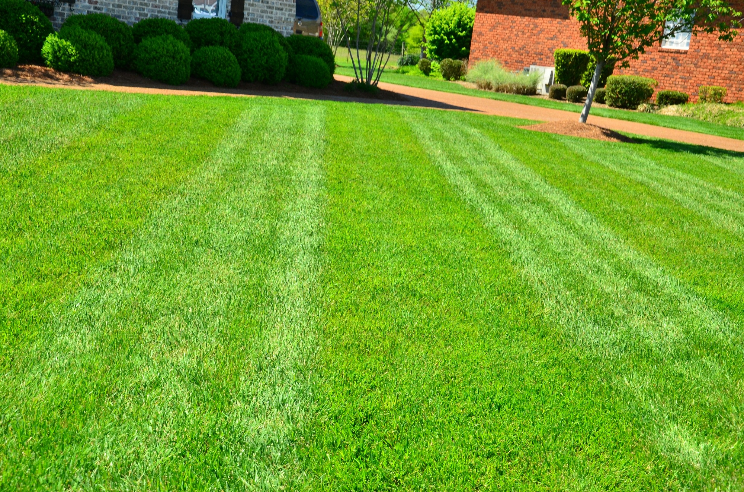 lawn-care-1.jpg