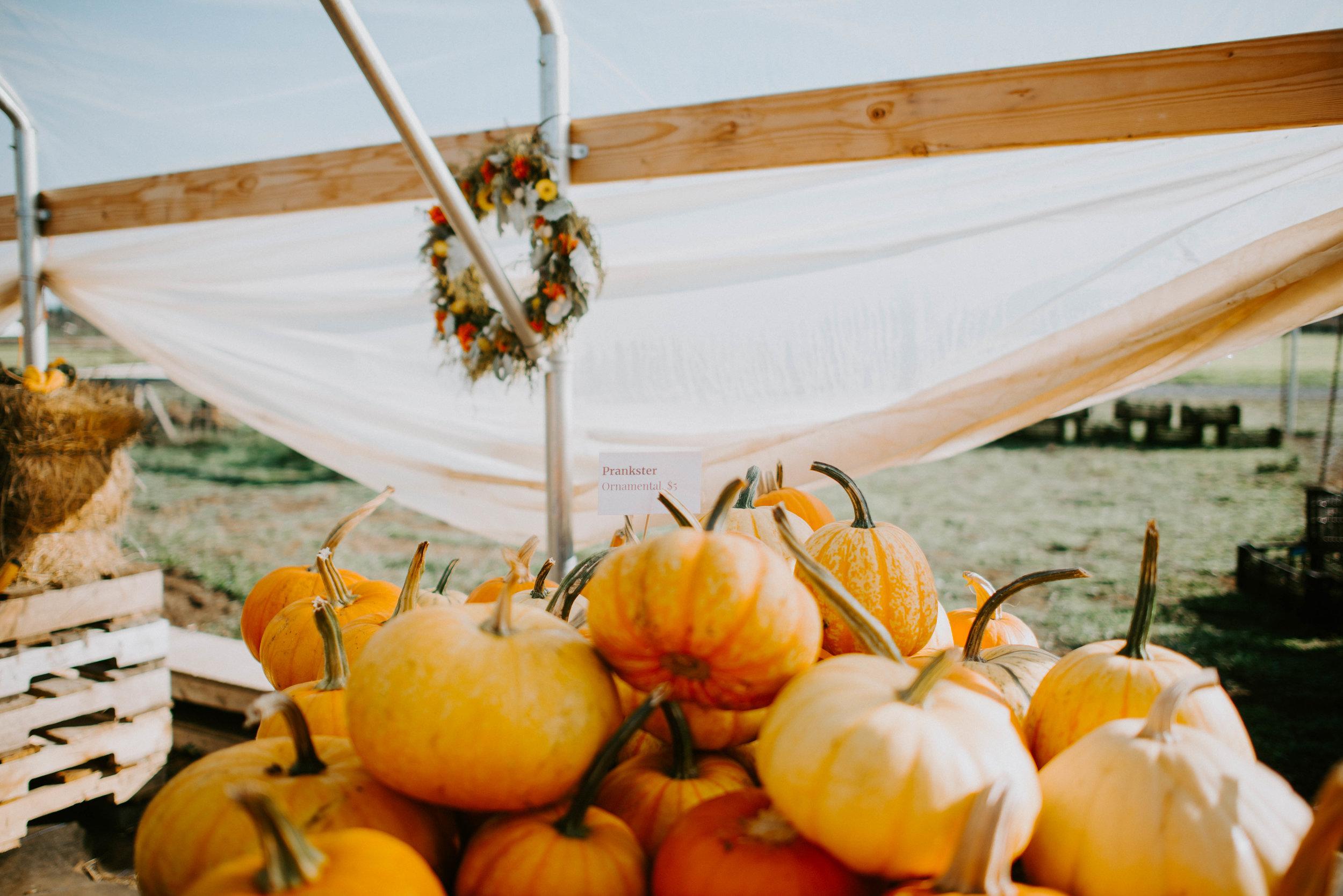 Ferndale Pumpkin Patch