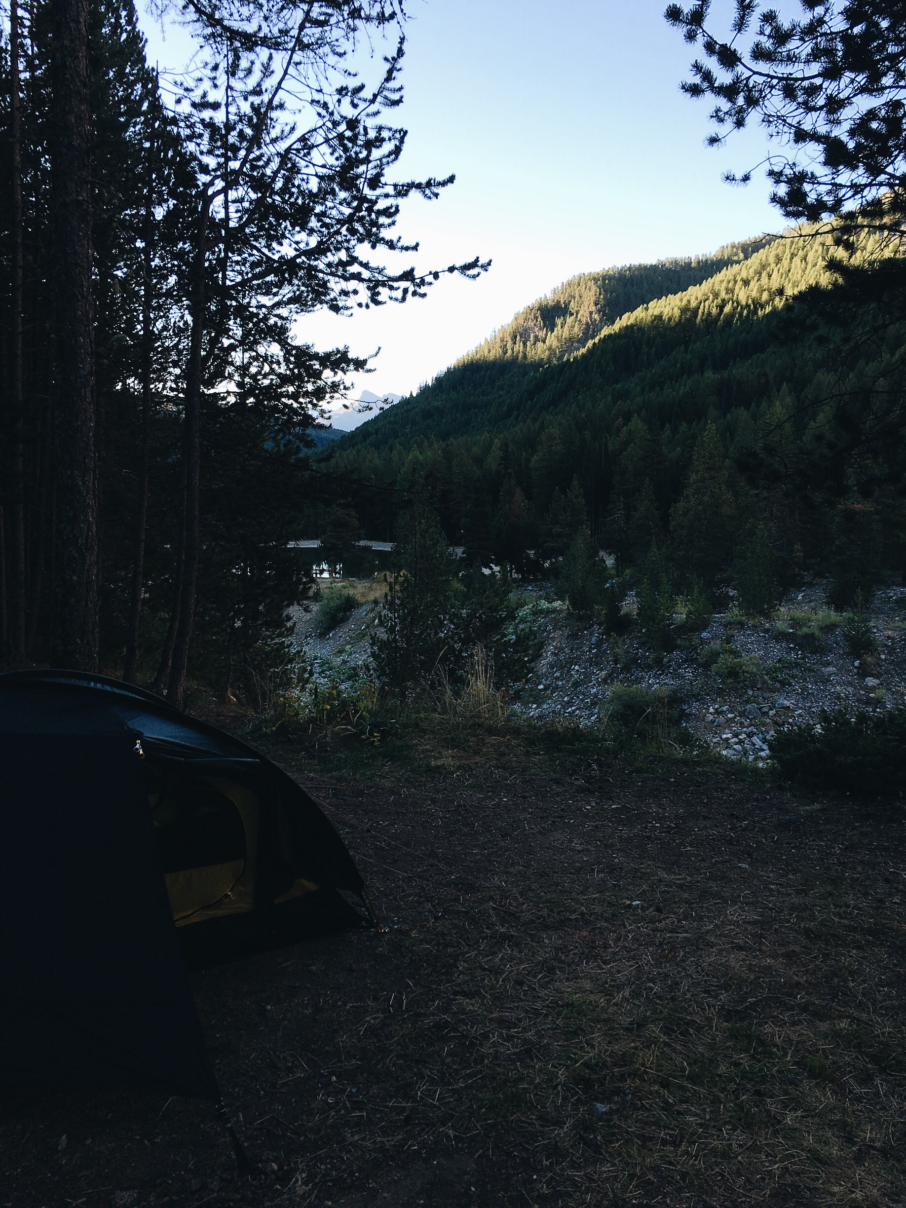 Tonight's pitch in the forest.