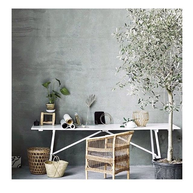 || under olive tree office inspiration || Thanks for house tree sitting until the weather warms up.