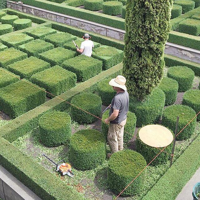 • 2016 • Time to learn to trim the Boxwoods.  #excited #frustratedlandscaper #boxwood #bucketlist #stonefields
