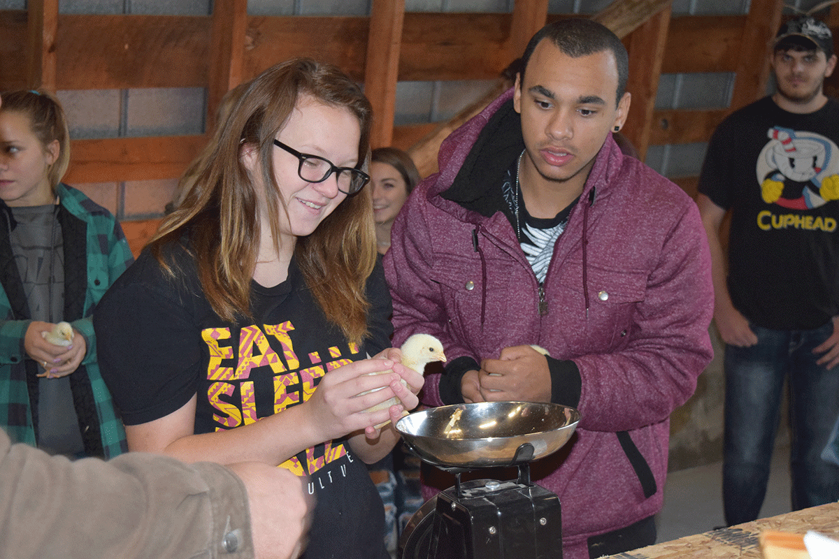 CTE's Ag-Science students are raising chickens as part of their curriculum.