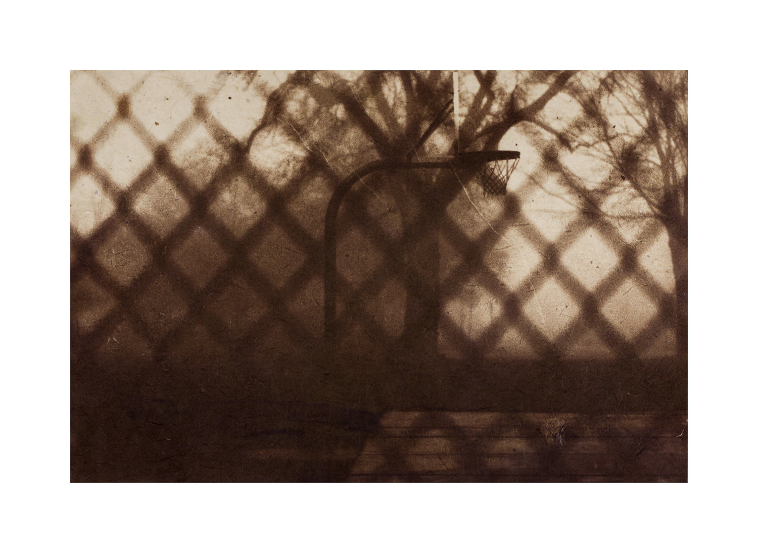 "Chain-link  Van Dyke brown print with chine collé 7 x 10"" 2013"