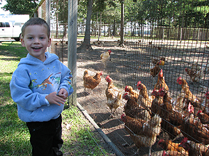 Liam and the Chickens