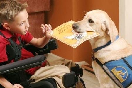 VRLS.service-dog-with-boy off leash K9 training.jpg