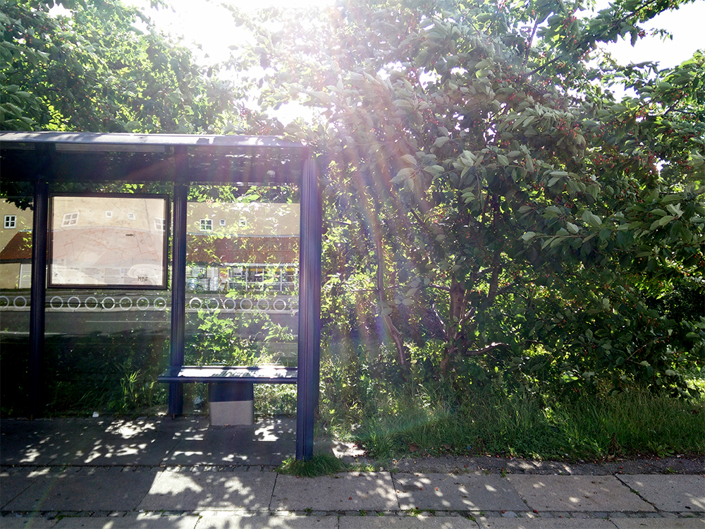 Sour cherries by the Valby bus stop, photo by Maya Hey