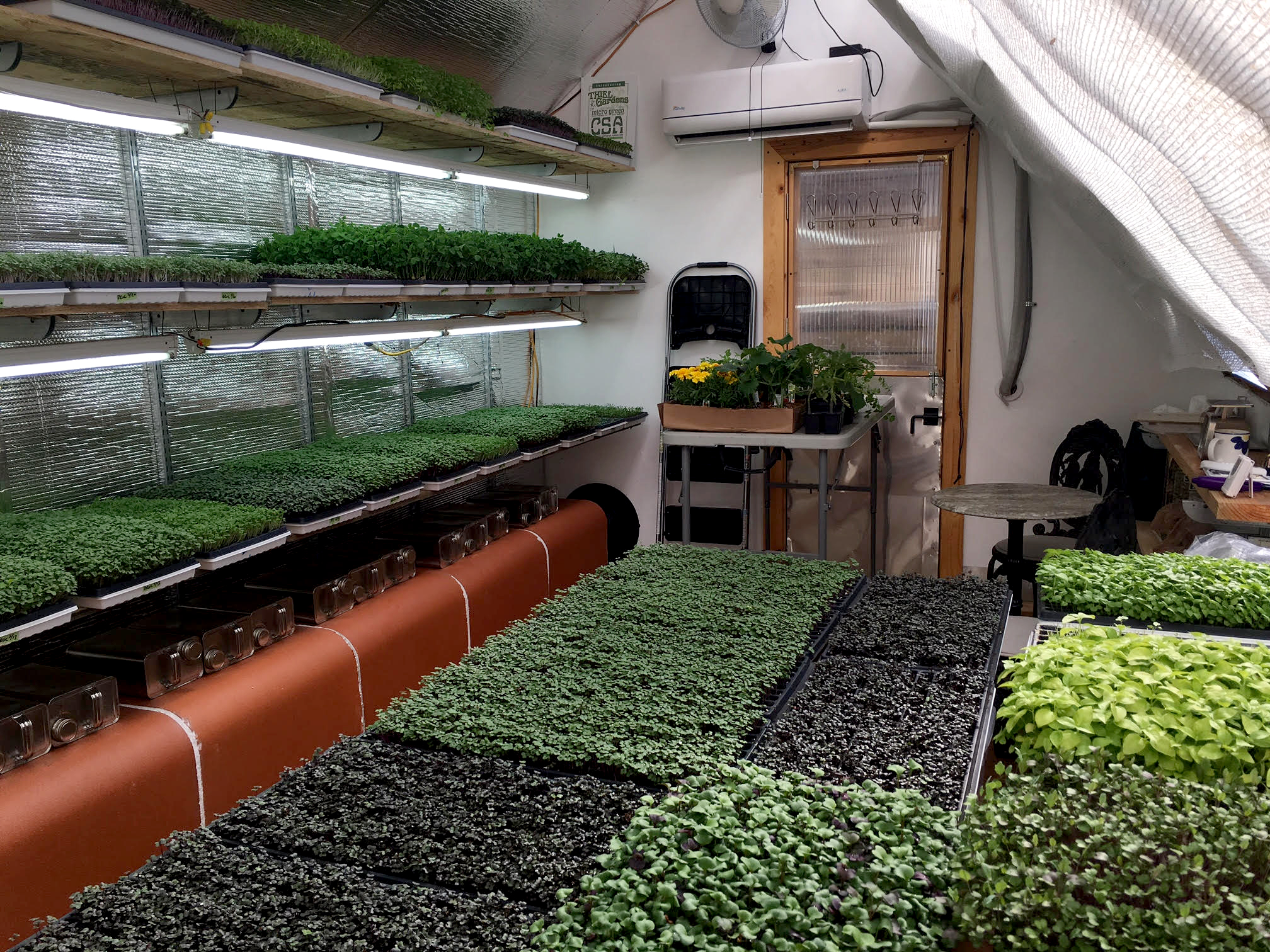 Microgreens can survive in the Thiel Gardens' deep winter greenhouse due to redundant heating methods: Cans of water rest on top of the wood stove exhaust, and the energy efficient mini-split is mounted above the door.