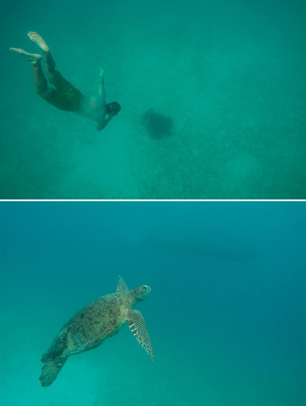 OUR FIRST SEA TURTLE SIGHTING ON LUBIN'S BIRTHDAY!