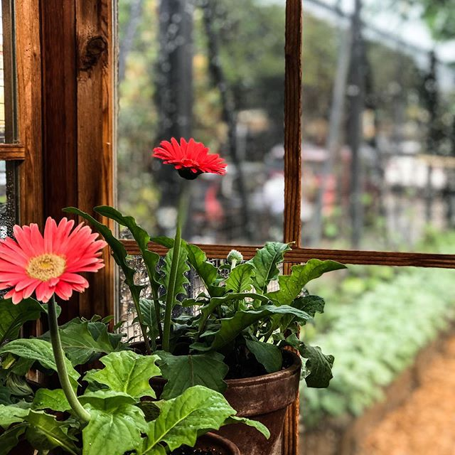 When you use nature to decorate, everyone can be Joanna Gaines. * * * * * #designabrand #gerberdaisy #pottedplants #growyourgarden #altsummit #wacotexas #gardenshed #growyourbiz #marketingtips #designlikeapro #design_interior #livebeautifully #share_your_landscape #smallbuisnessowner #retaildesign #joannagaines #joannagainesismyspiritanimal #acolorstoryapp #beinspiredbyart #iphonephotographyoftheday #learnphotography #brandyourbusiness #marketing101 #travel_capture #travel_blog #creativetravel #travelforwork