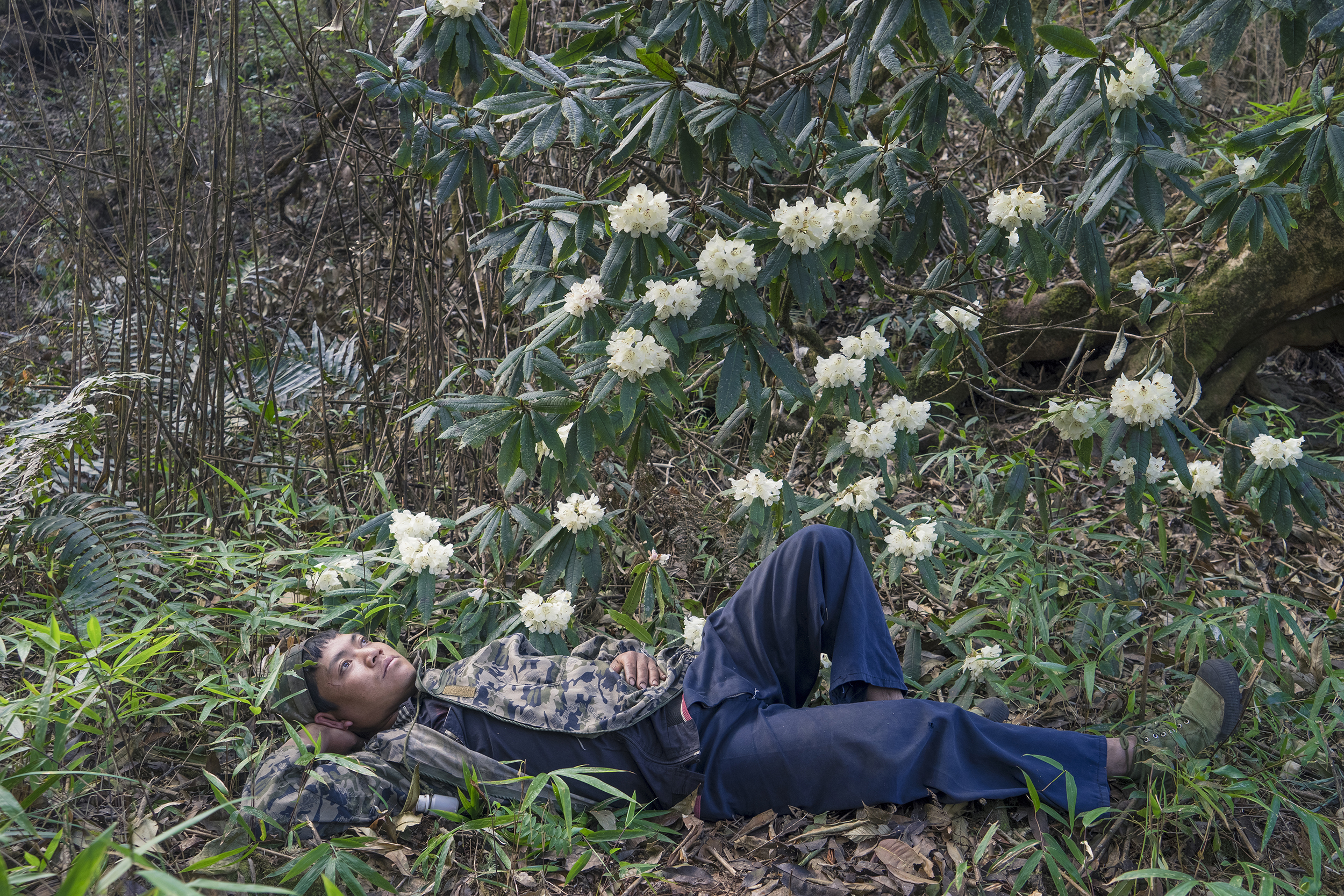 """Cheng Xinhao, from his project """"Beyond the Forest: The Mang Borderland.""""  The Mang resting under the azalea."""