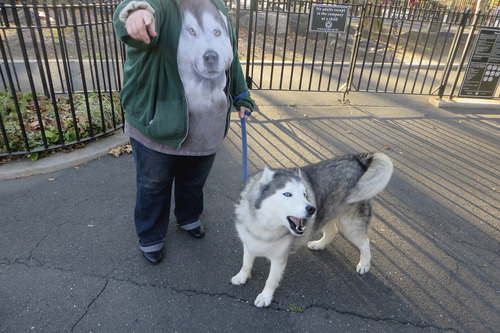 A long-time Hell's Kitchen resident wears a husky t-shirt while walking her husky.