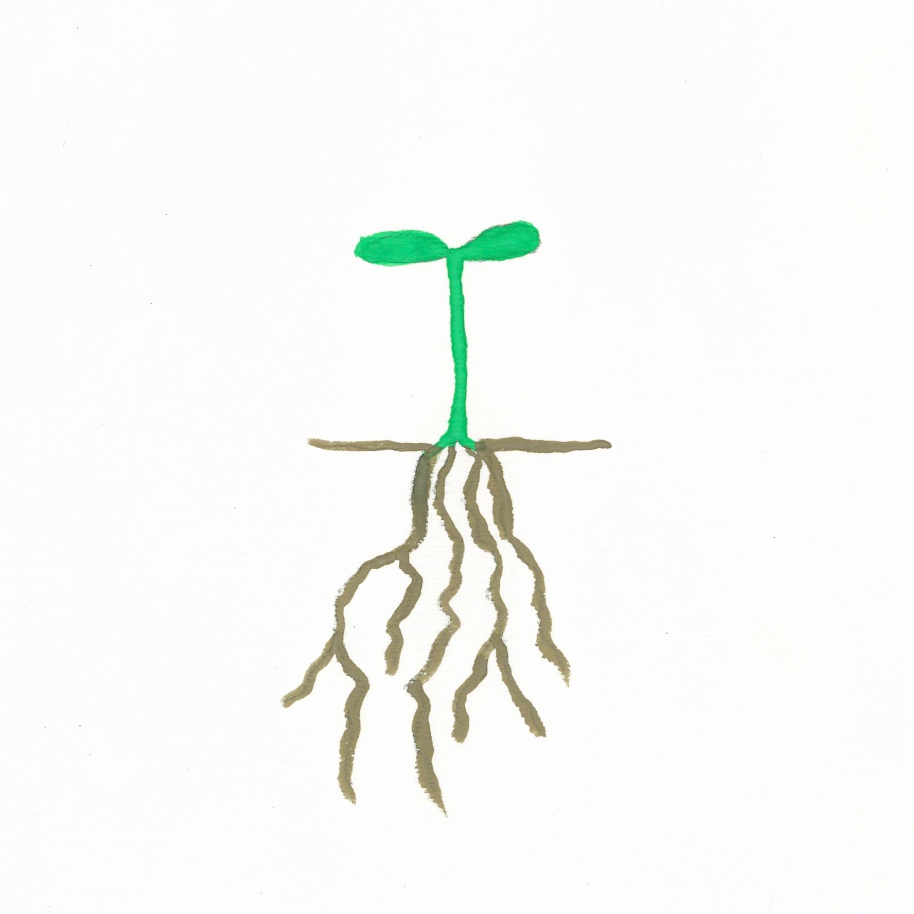 Mustard Seed Cover 1.jpg