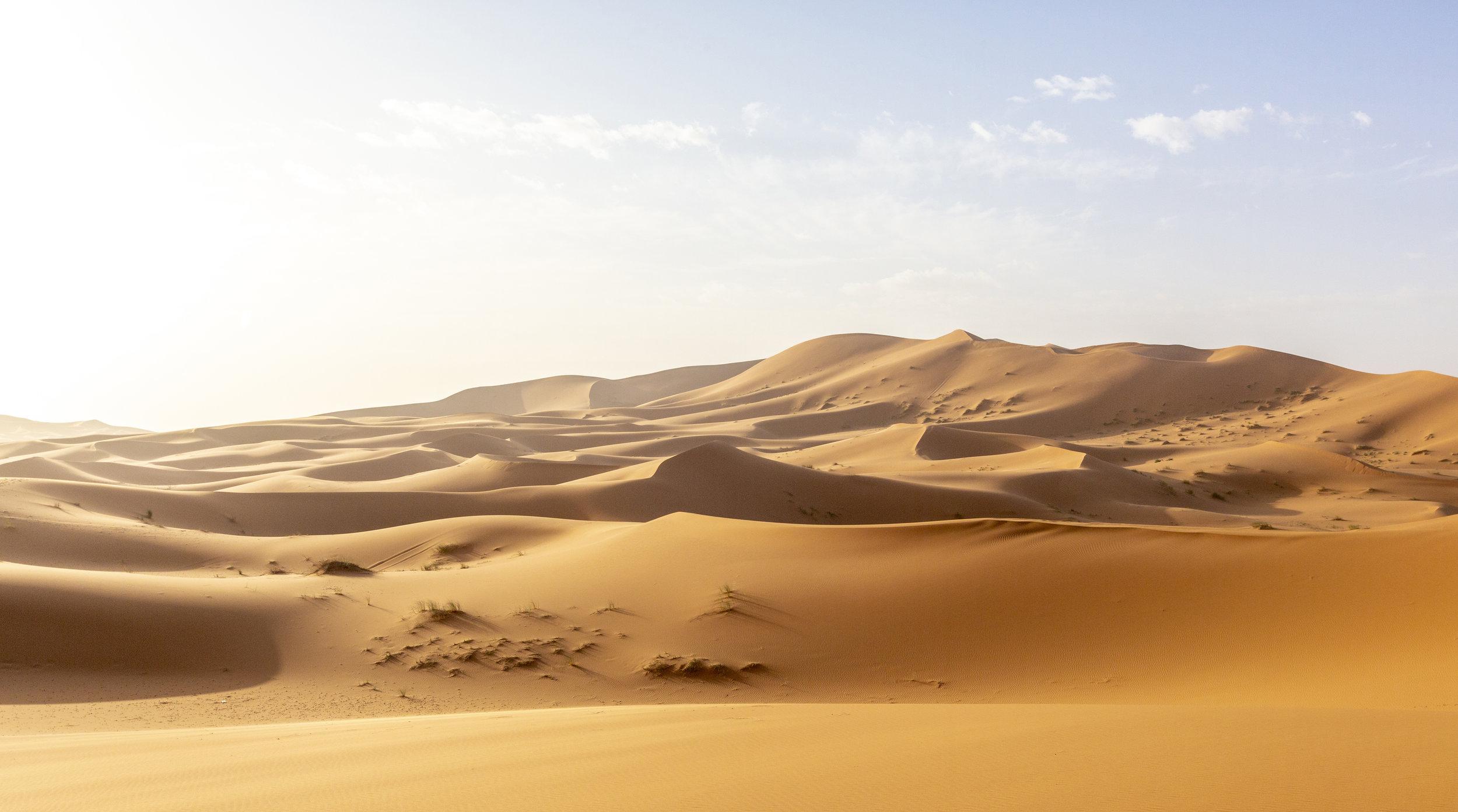 SAHARA-392.jpg