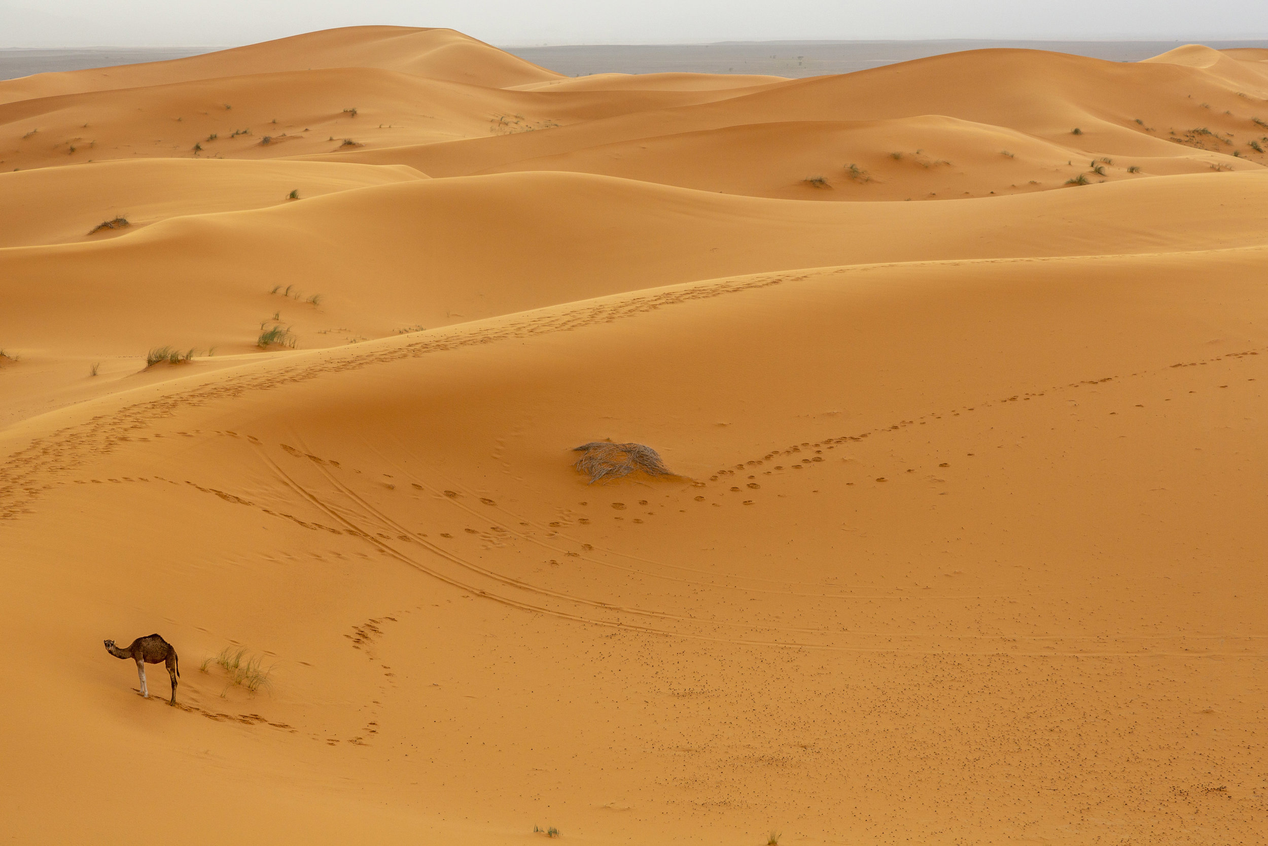 SAHARA-285.jpg