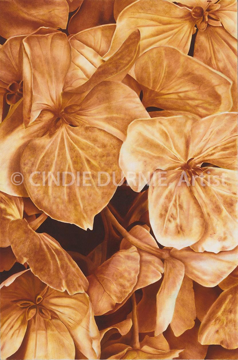 hydrangias.jpg