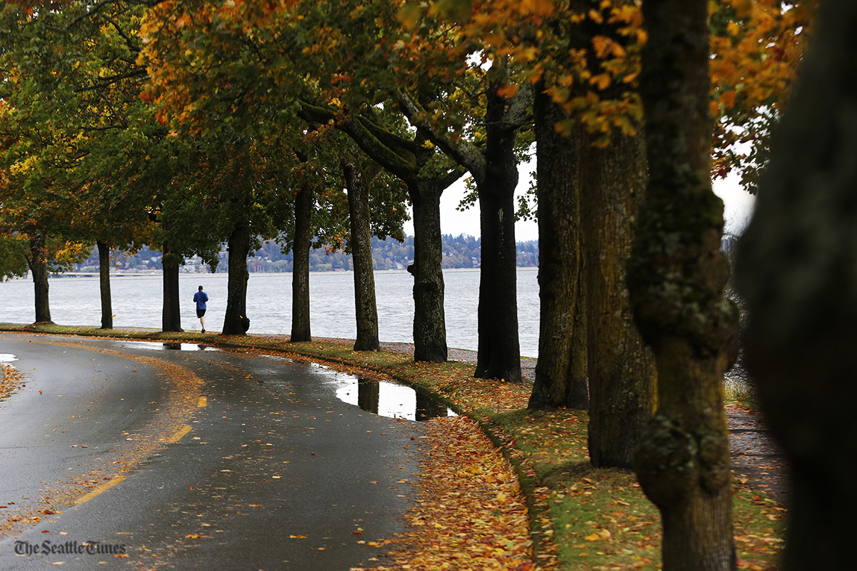 A runner makes his way down colorful Lake Washington Blvd. near Seward Park on Saturday, October 15, 2016. Strong winds and heavy rain is expected to hit the northwest caused by remnants of a typhoon.