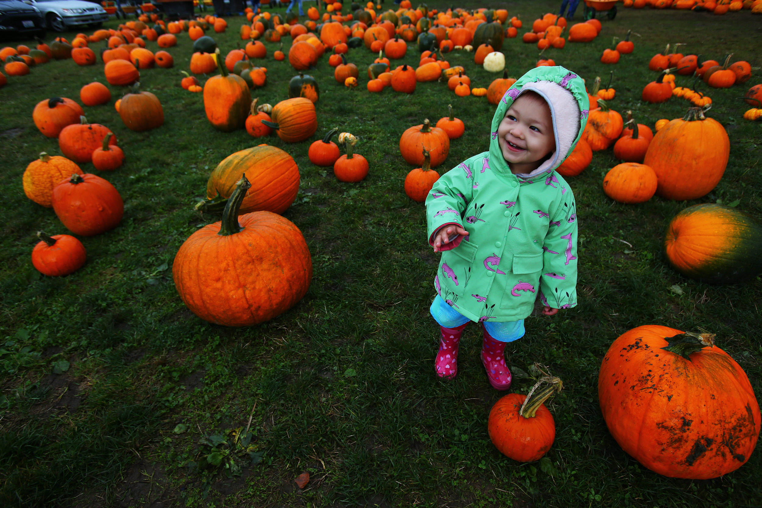 One-year-old Leena Morzden, daughter of Kristin and Roger Morzden, looks for the perfect pumpkin while at Bob's Corn & Pumpkin Farm in Snohomish on Sunday, October 16, 2016.