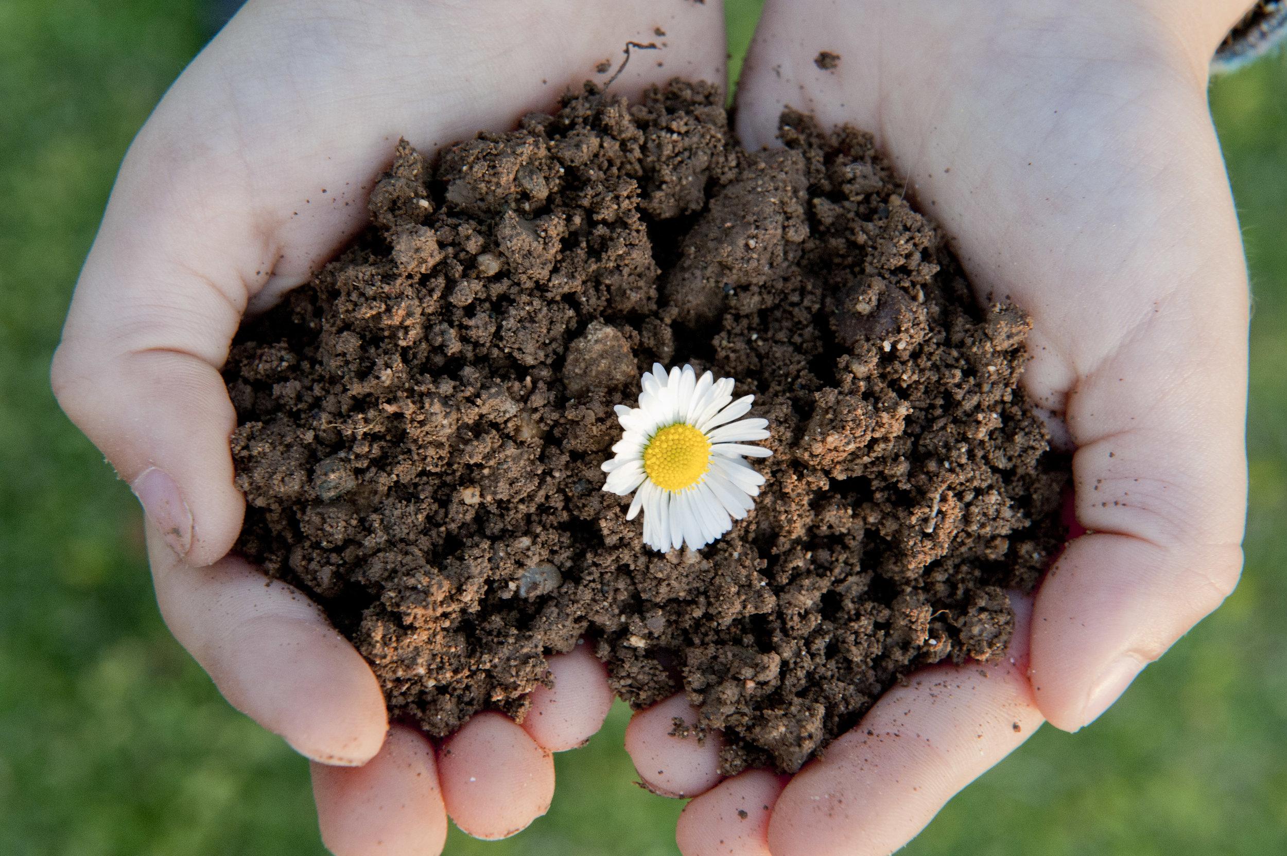 soilcompost2.JPG
