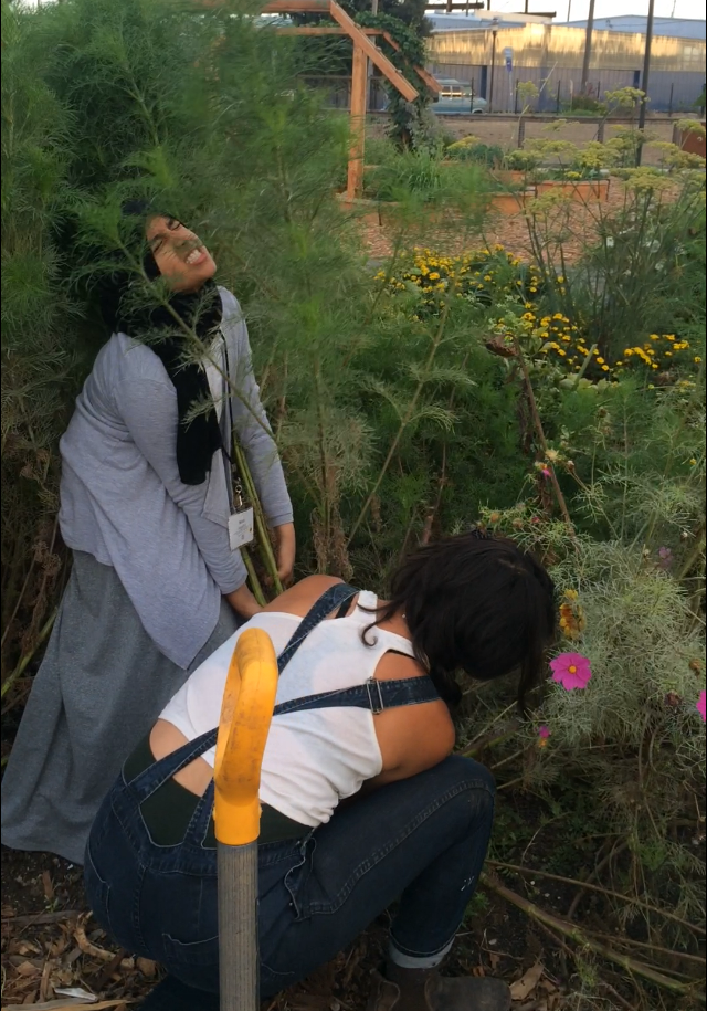 In the image above, WOLLP student, Noel, pictured in the black head scarf, channels her energy to pull out a very large weed with the help of Environmental Instructor, Neeka, pictured in the overalls.