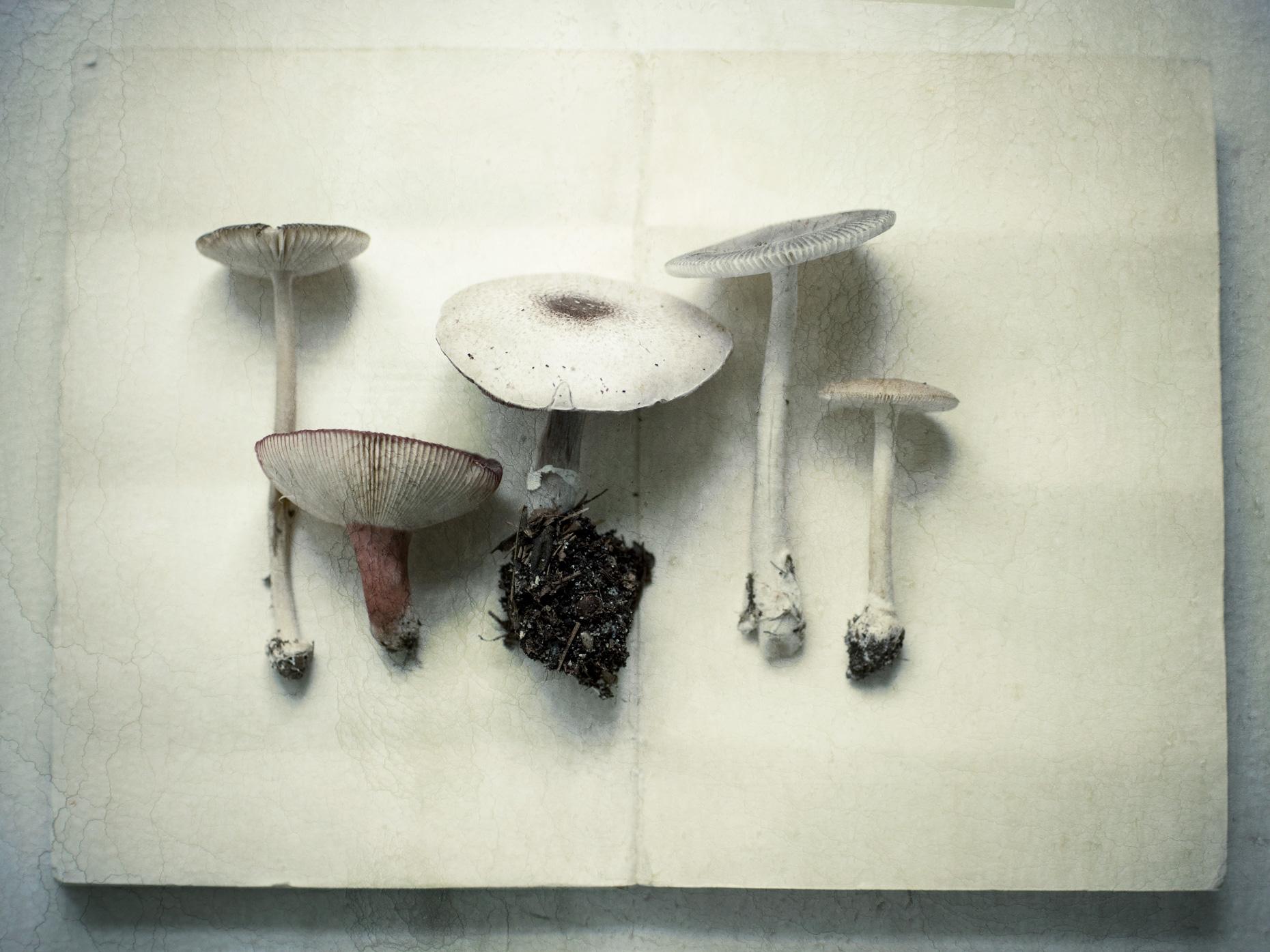 Product Photography Still Life Derek Israelsen 022 Fresh Mushrooms
