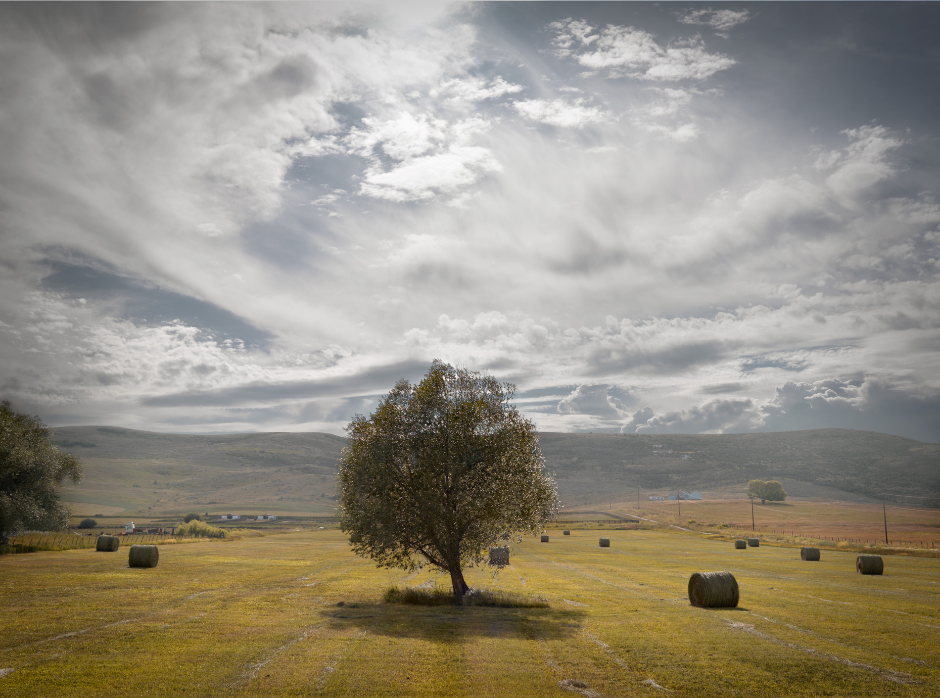 Travel Photography Derek Israelsen 044 Tree Landscape