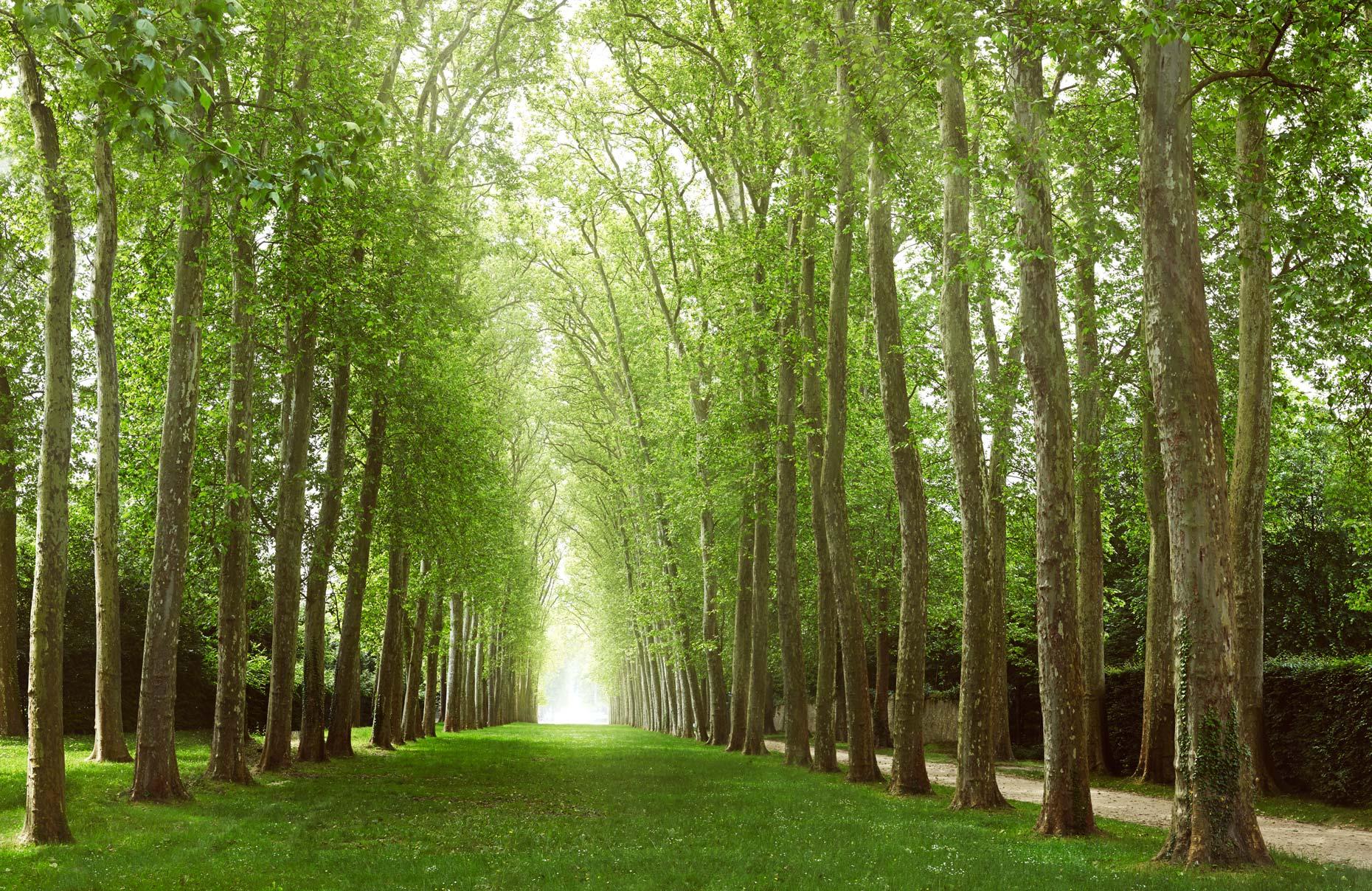 Travel Photography Derek Israelsen 055 Tree Tunnel Europe