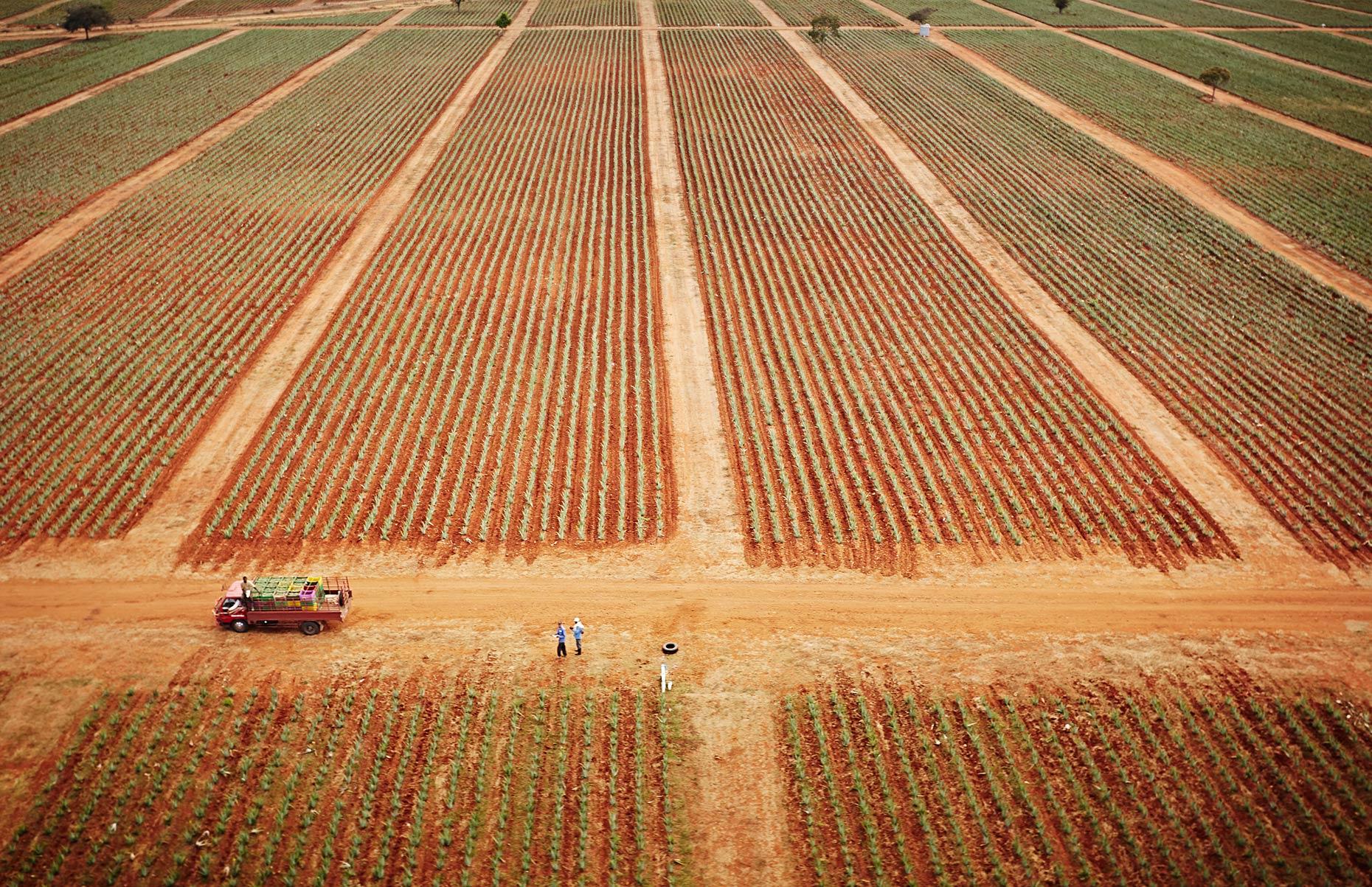 Domincan Republic Aerial Aloe Vera Fields