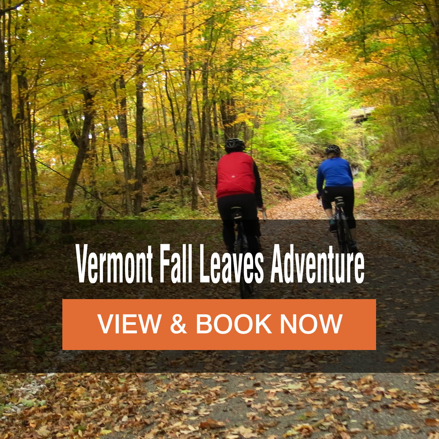 Vermont Fall Leaves