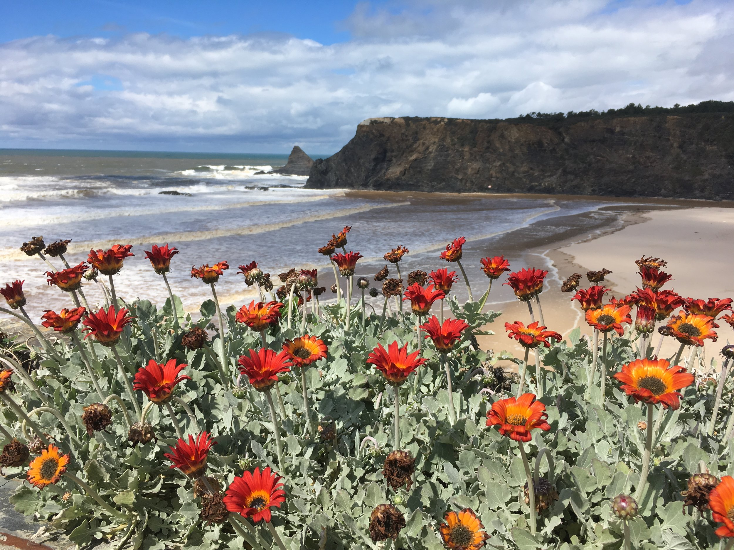 Beach with flowers.jpg